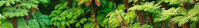 Tree fern forest canvas print